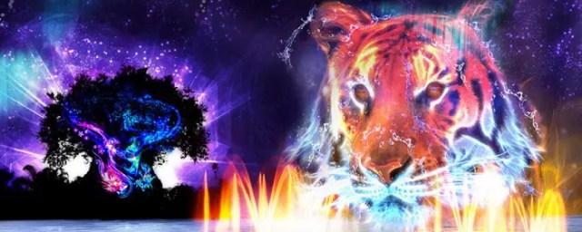 Animal Kingdom Night