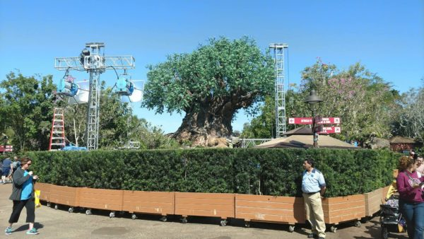 Preparations Begin for 'The View' Taping at Animal Kingdom 1