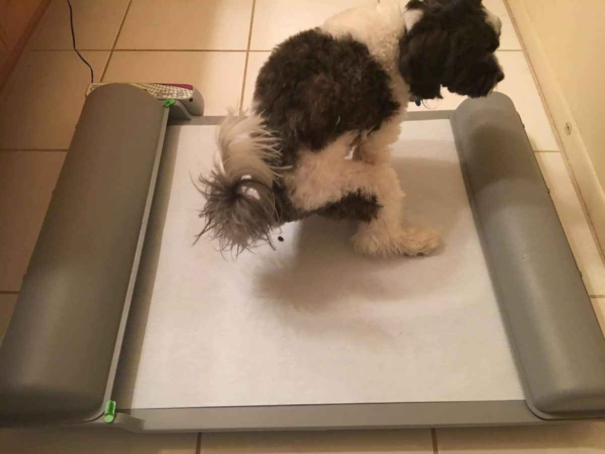 Brilliantpad Review The Self Cleaning Indoor Dog Potty
