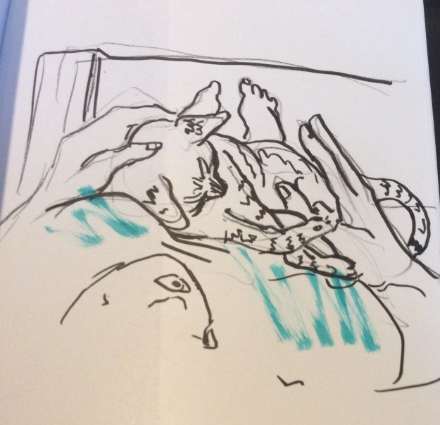 Cody bed sketch Sept 25 2021 by Suzanne Forbes 2