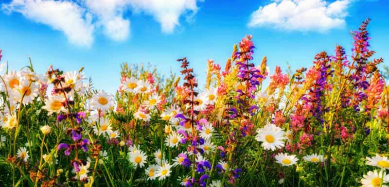 Atelier d'art floral avant soirée chippendales