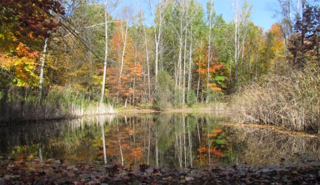 Arnold Easement in Montcalm County