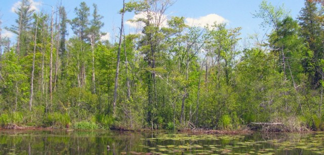 CWC_Neely Preserve 1_Isabella County