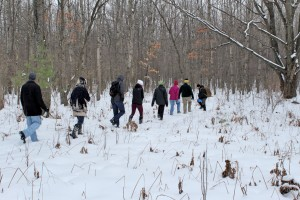 Off-trail is the best way to search for animal tracks in the snow