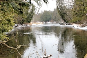 Winter view of the Chippewa River downstream from the preserve
