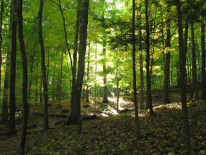 Sunlight streams through a wooded hillside at the Messinger Easement