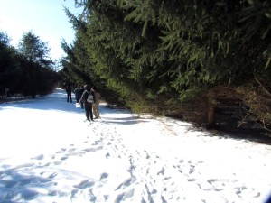 Conifer trees are the first encountered on the walk