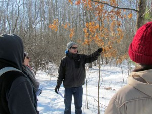 Jon discusses why many of the young oak trees retain their leaves well into the winter season