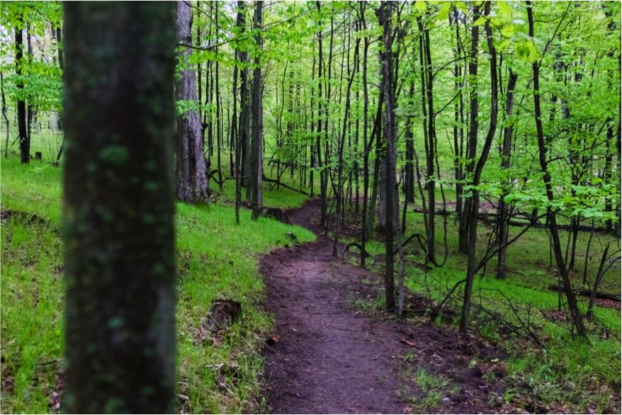 bundy-trail-1-resized