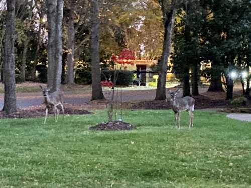 iphone 11 pro photo of deer in low light