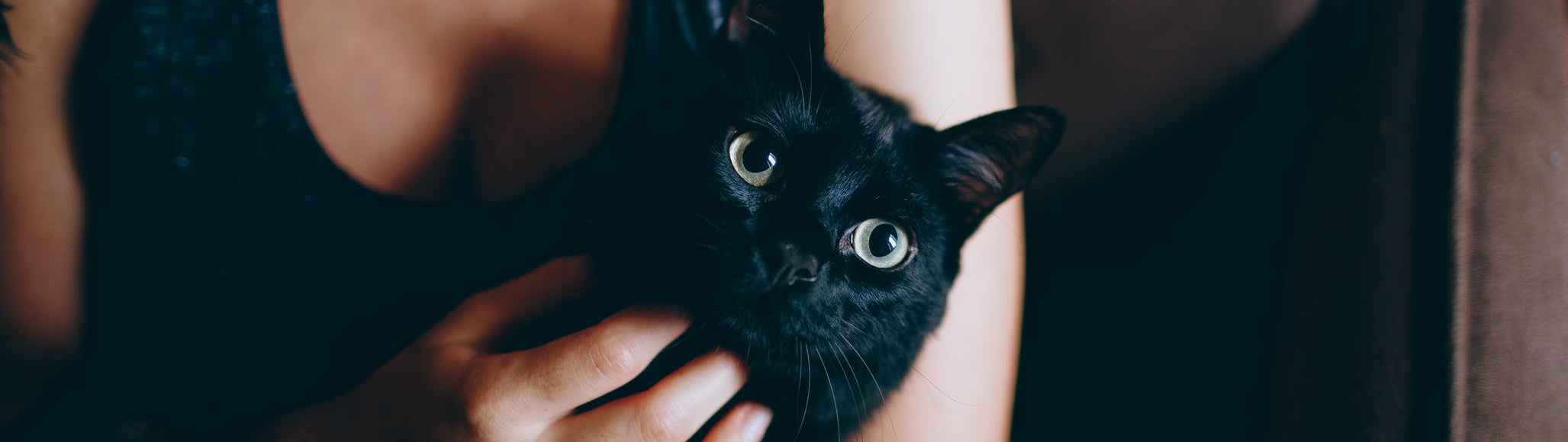 Cat whisperers on the other hand, can communicate with physically and emotionally abused cats.