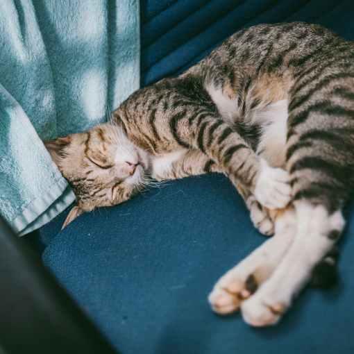 Wichtige Tipps zur Ernährung bei Katzen