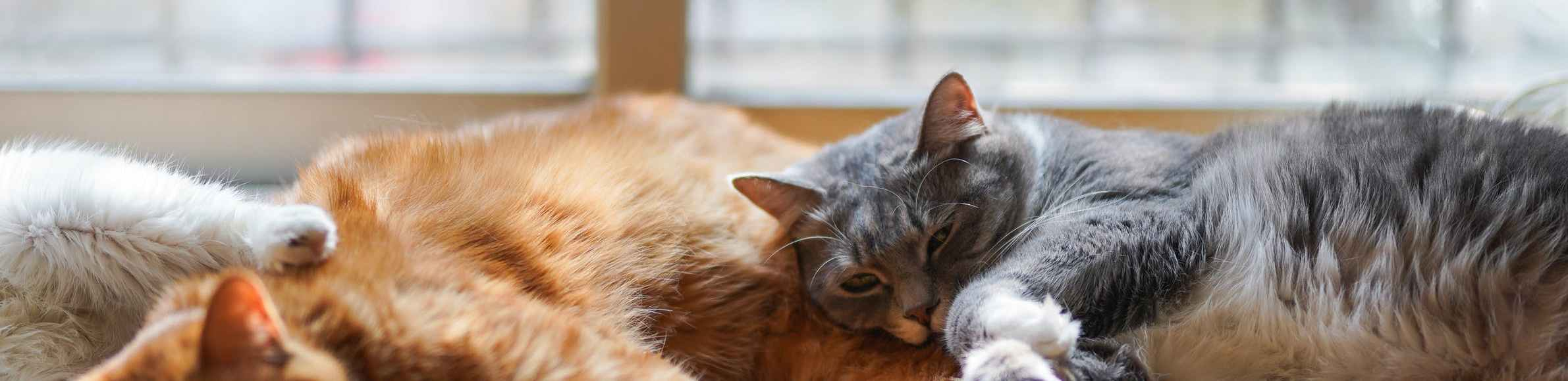 Tips to stop your cat from sparaying