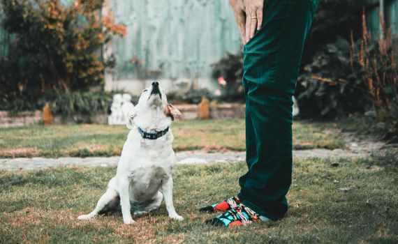 Hundehaltung und Pflichten