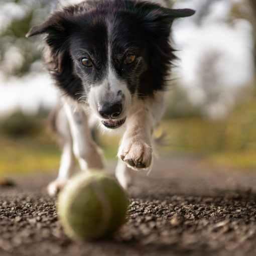 Hundespielzeug und Hundezubehör