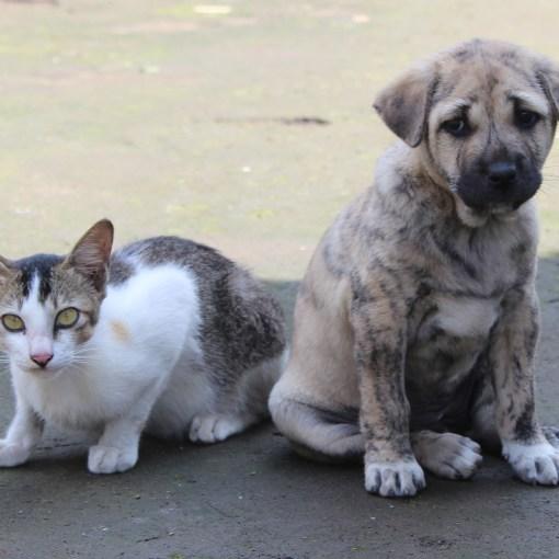 Hunde und Katzen registrieren chippen