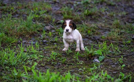 Eine traurige Geschichte - Hundehandel aus Sicht eines Hundewelpen.