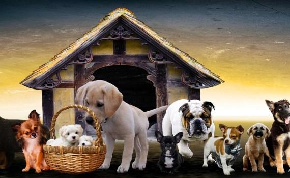 Tipps zur Hundeausbildung
