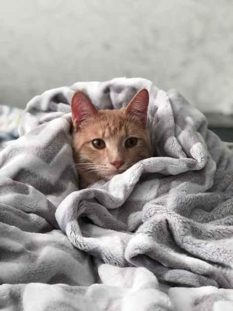 Bei Hypothermie wickeln Sie Ihre Katze am besten in eine wame Decke