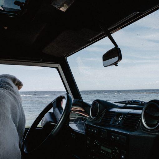 Urlaub mit Auto und Hund