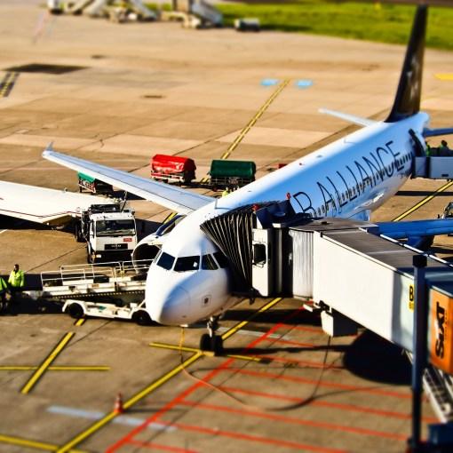 Flugreise - Was Sie beim Urlaub mit Hund beachten sollten.