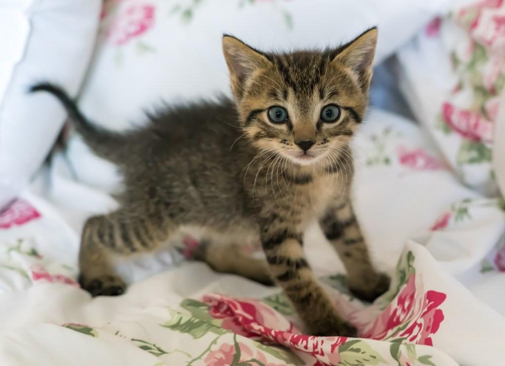 """Langsames Blinzeln - Der Großteil der Katzenliebhaber interpretiert das einfach als ein """"Ich liebe Dich""""."""