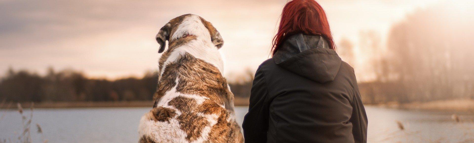 Ein Hund gibt Ihnen das Gefühl, beschützt zu werden und im Notfall Hilfe herbei zu bellen.