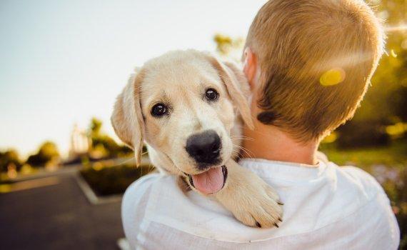 Ein Hund ist der beste Problemlöser denn es gibt.