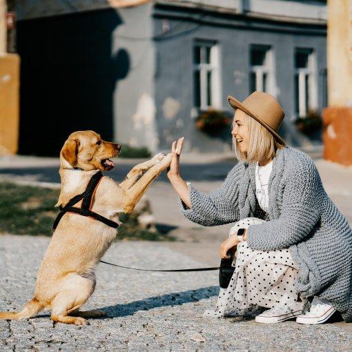 Hunde können sogar Krankheiten wie Krebs oder Diabetes riechen. Auch beim Stottern könne Hund helfen.