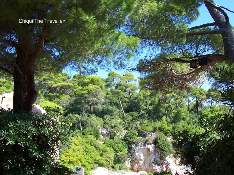 Dubrovnik Lokrum pinos