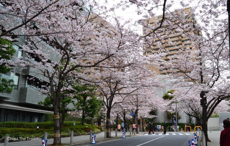 Roppongi Itchome sakura Tokio 2