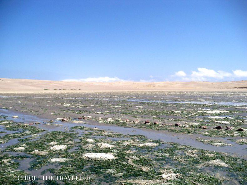 Humedales Paracas
