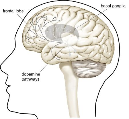 Image result for brain dopamine