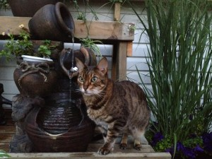 Sarabi next to the fountain on a warm summer's evening.