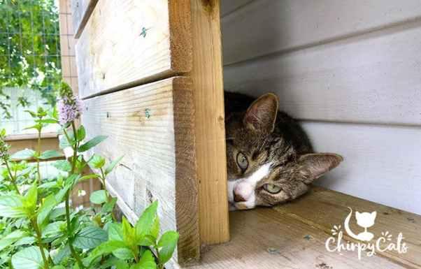 cat sleeping in catio condo