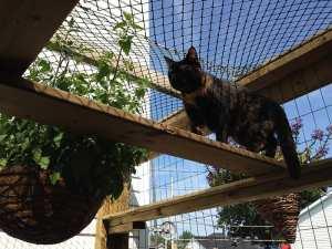 Cat super higway in catio