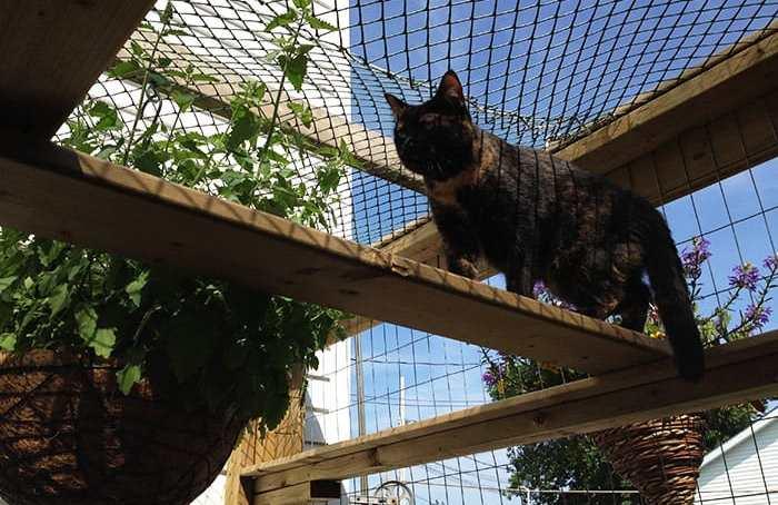 catnip basket in catio