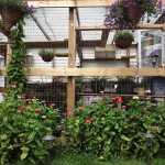 Catio exterior, zinnia flowers