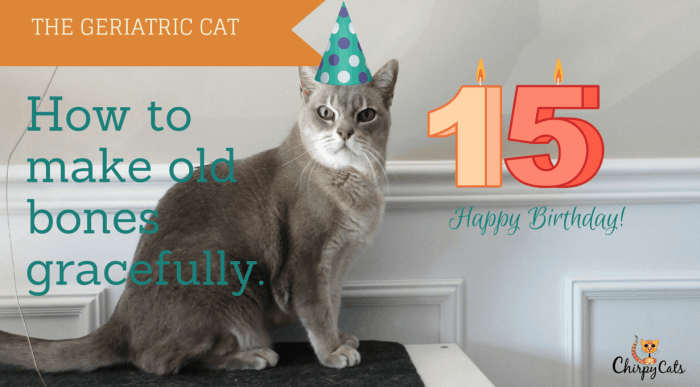 Senior cat's birthday