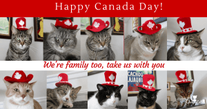 Canada Day Hats for the Chirpy Cats