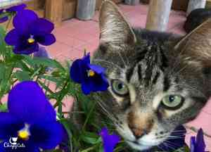Hi, my name is Ollie and I love pansies!