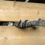Cat stretches out his paw