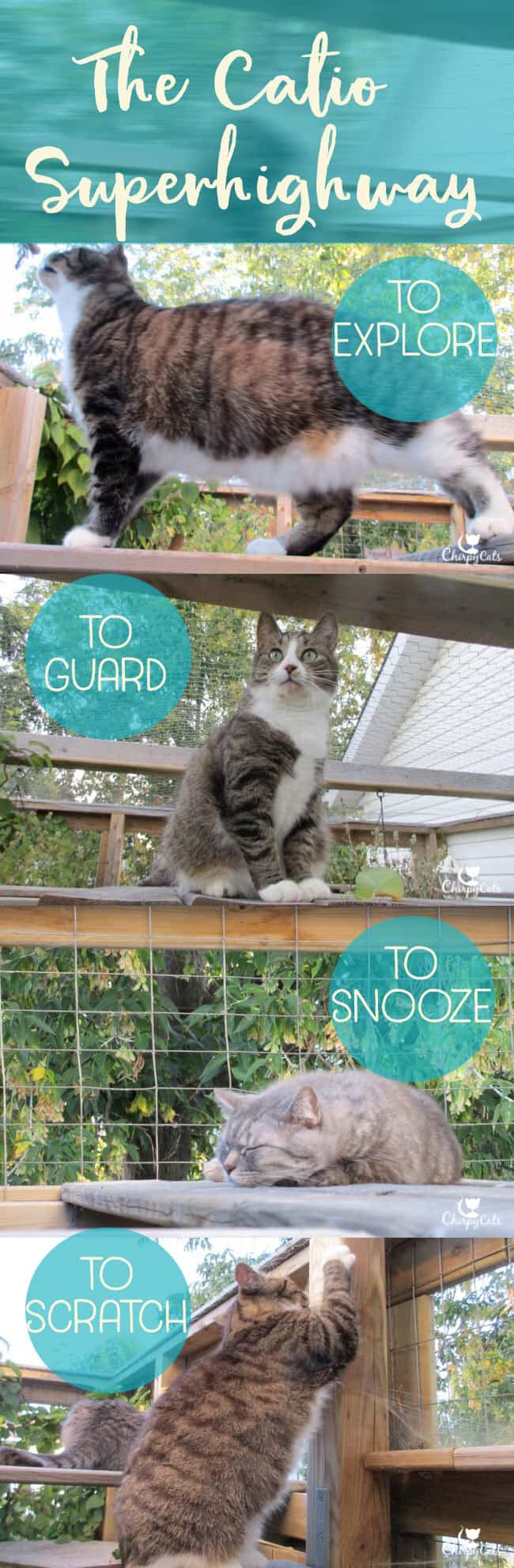 Why your cat needs a catio superhighway. Let's go up!