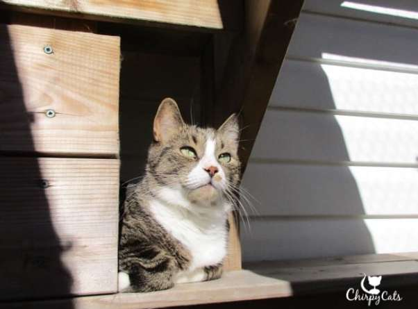 Cat looks up from the catio