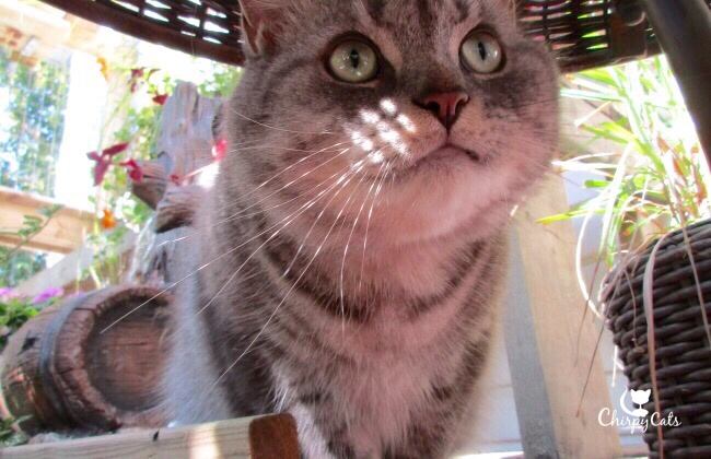 Cute cat in catio