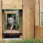 Old cat walks through cat garden