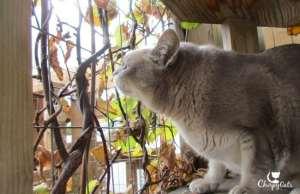 cat sniffs silver vine twigs
