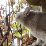 cat sniffs silver vine twigs