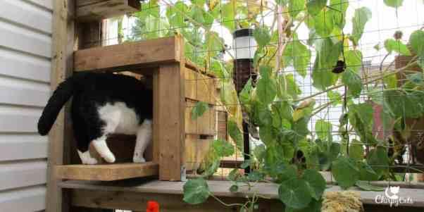 tuxedo cat runs off into the tunnel