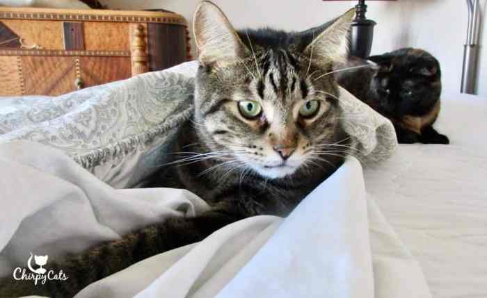 cats loved playing in the sheets